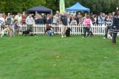 2010 Fun Dog Show