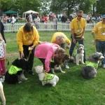pat-dogs-parade-ii-jpg