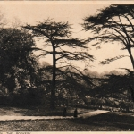 The Rookery 1938