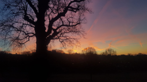 Winter morning Streatham Common 2017