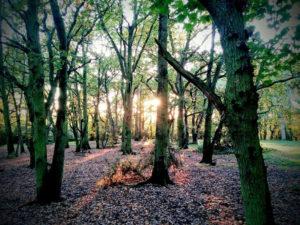 streatham woods