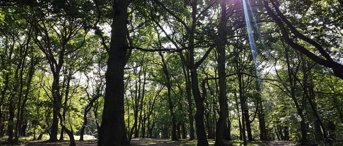streatham woods june 2017 L O'Grady