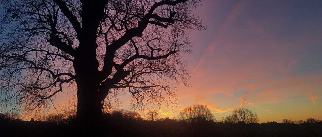 trees at sunrise on a winter morning streatham common
