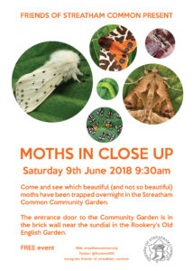 Moths in close up 2018