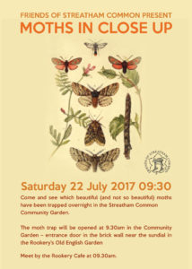 Moths in close up talk 22/07/17 streatham common