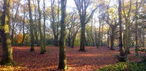 streatham common woods. LOGrady