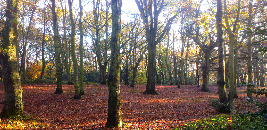 Streatham Common's woodland to receive funding