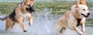 doggy splash day 2017