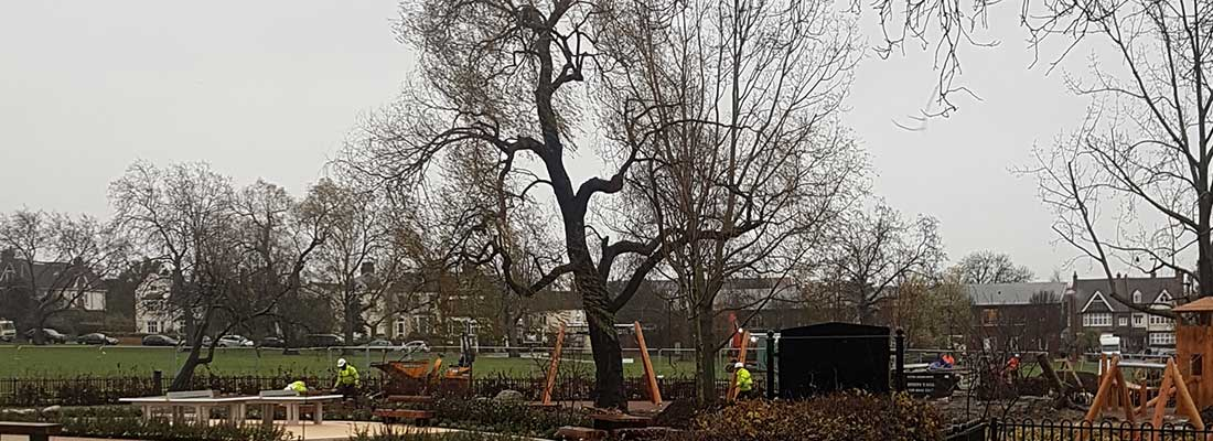 Playground to lose tree due to safety concerns