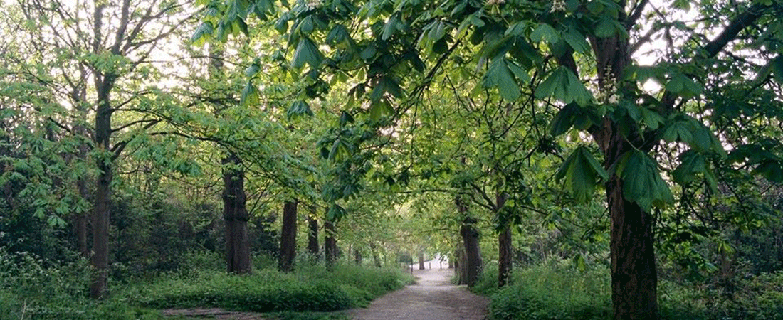 the avenue streatham common copyright lizzie o'grady