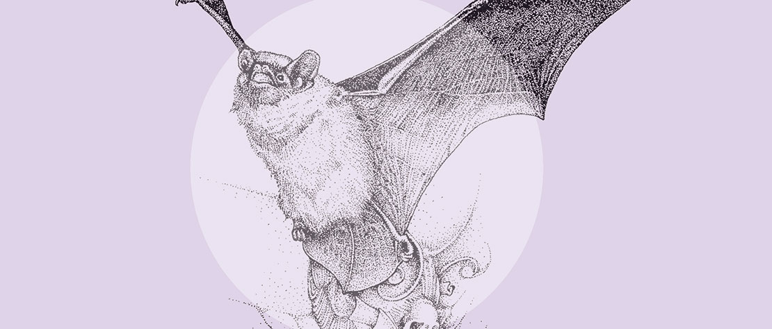 Summer Bat Walk: Friday 7th September 2018 at 7.45pm