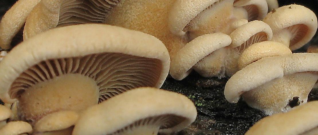 Fungi Walk: Saturday 20 October 2018. 11.00am