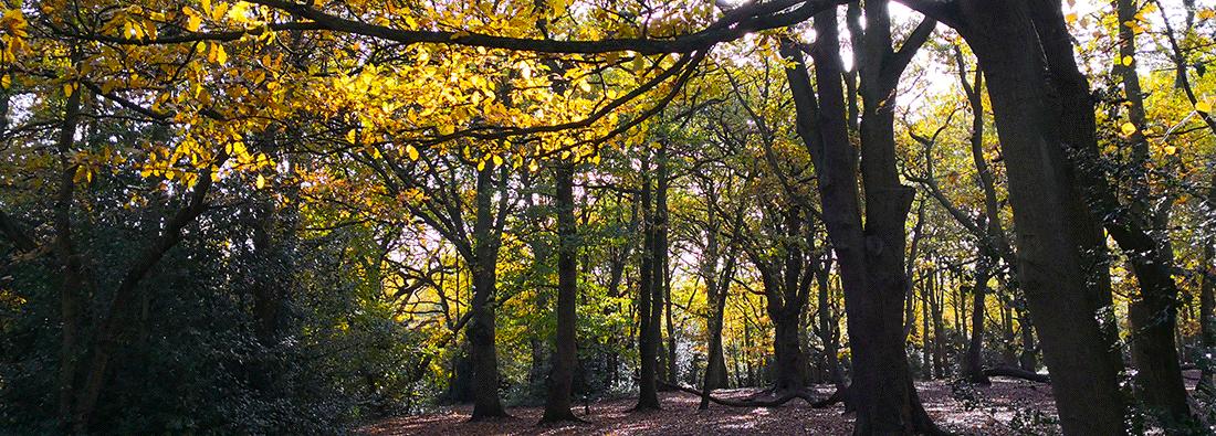 Consultation: Tree Felling Thursday 22/11/18