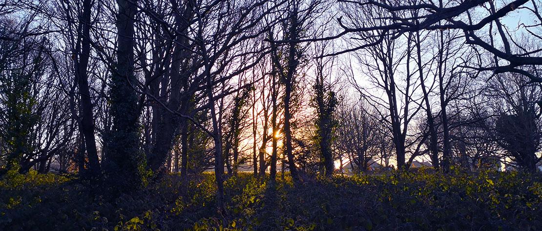 Winter Tree & Bird Walk: Thursday 21/02/19 @ 11.00am