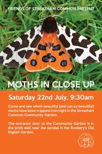 moths_close_up_july2017