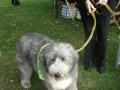 2nd-best-rescue-dog-jpg