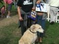 2nd-best-veteran-dog-jpg