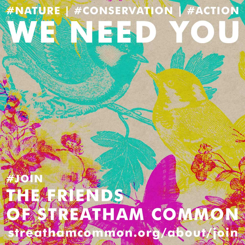 Why Join The Friends of Streatham Common