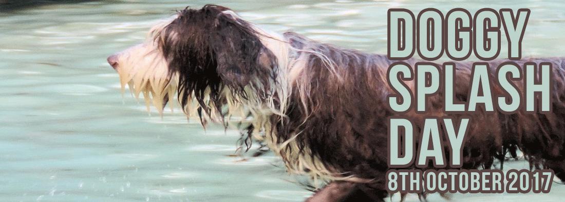 Doggy Splash Day 8th October 2017