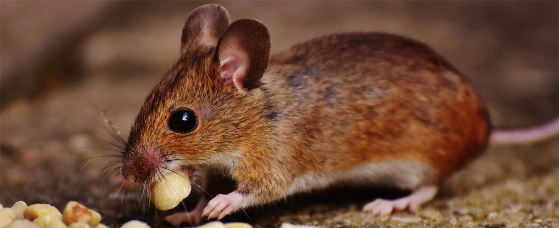Small Mammal Surveying and Workshop: 23rd and 24th June