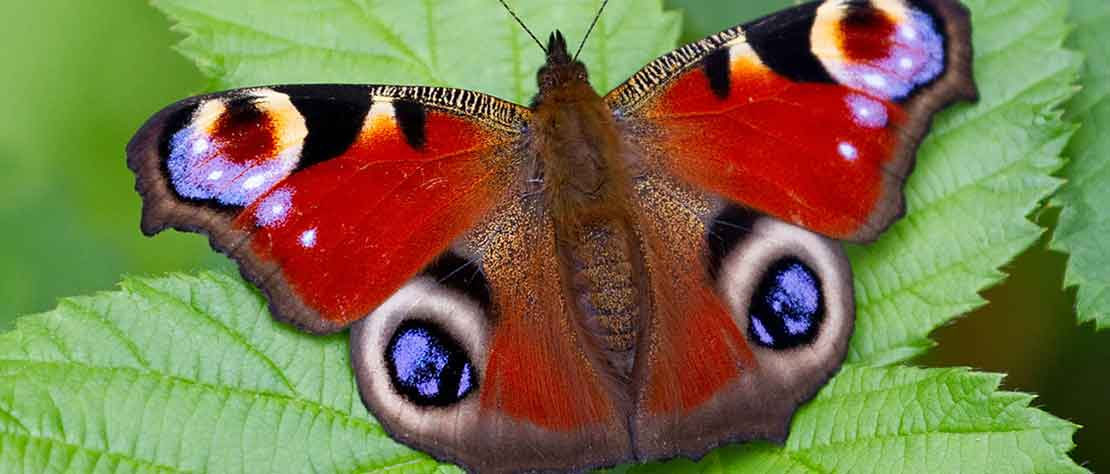 Butterfly Walk Saturday 13th July 2019. 3.00pm